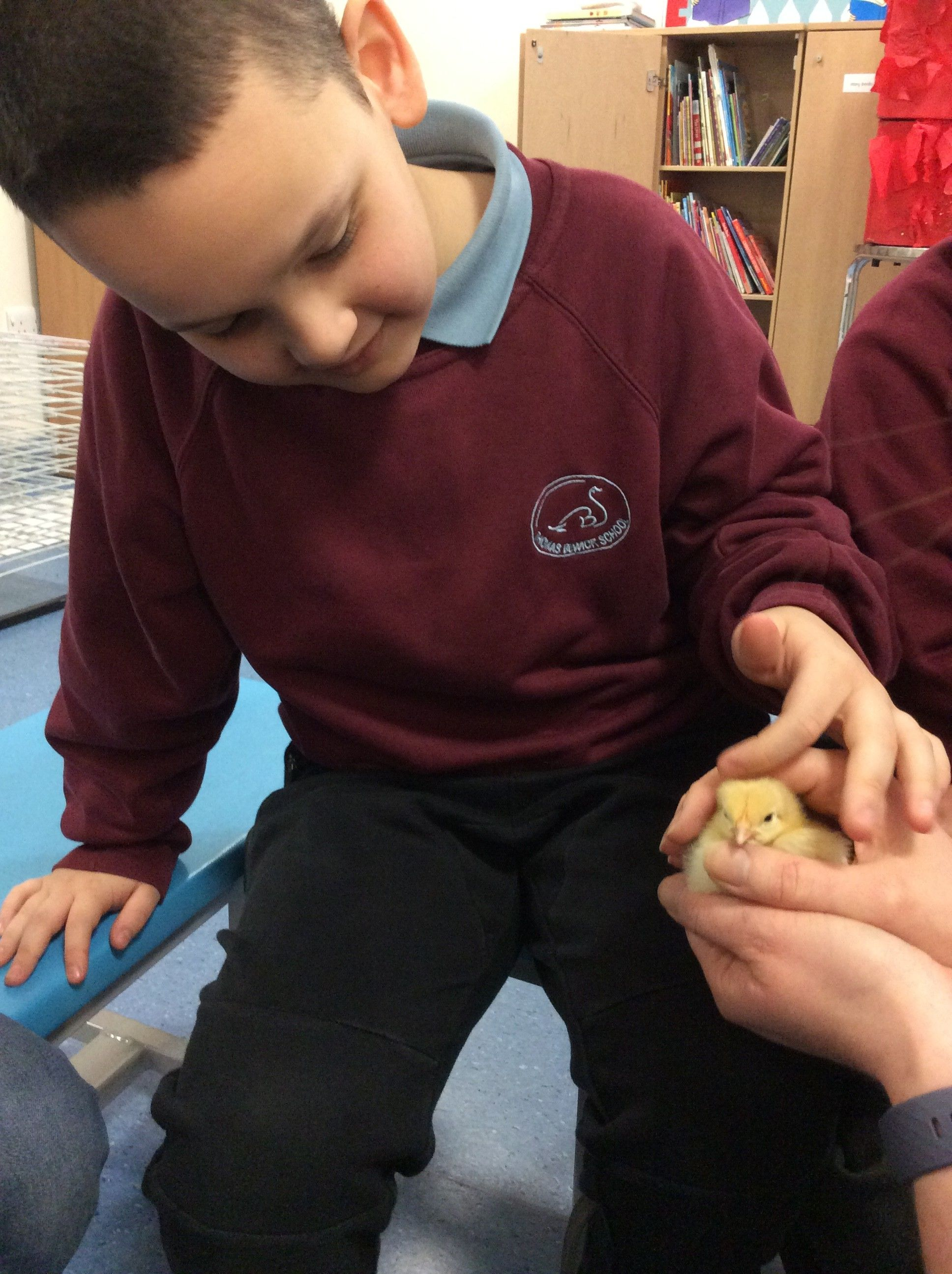 Science Week - Amazing chicks!