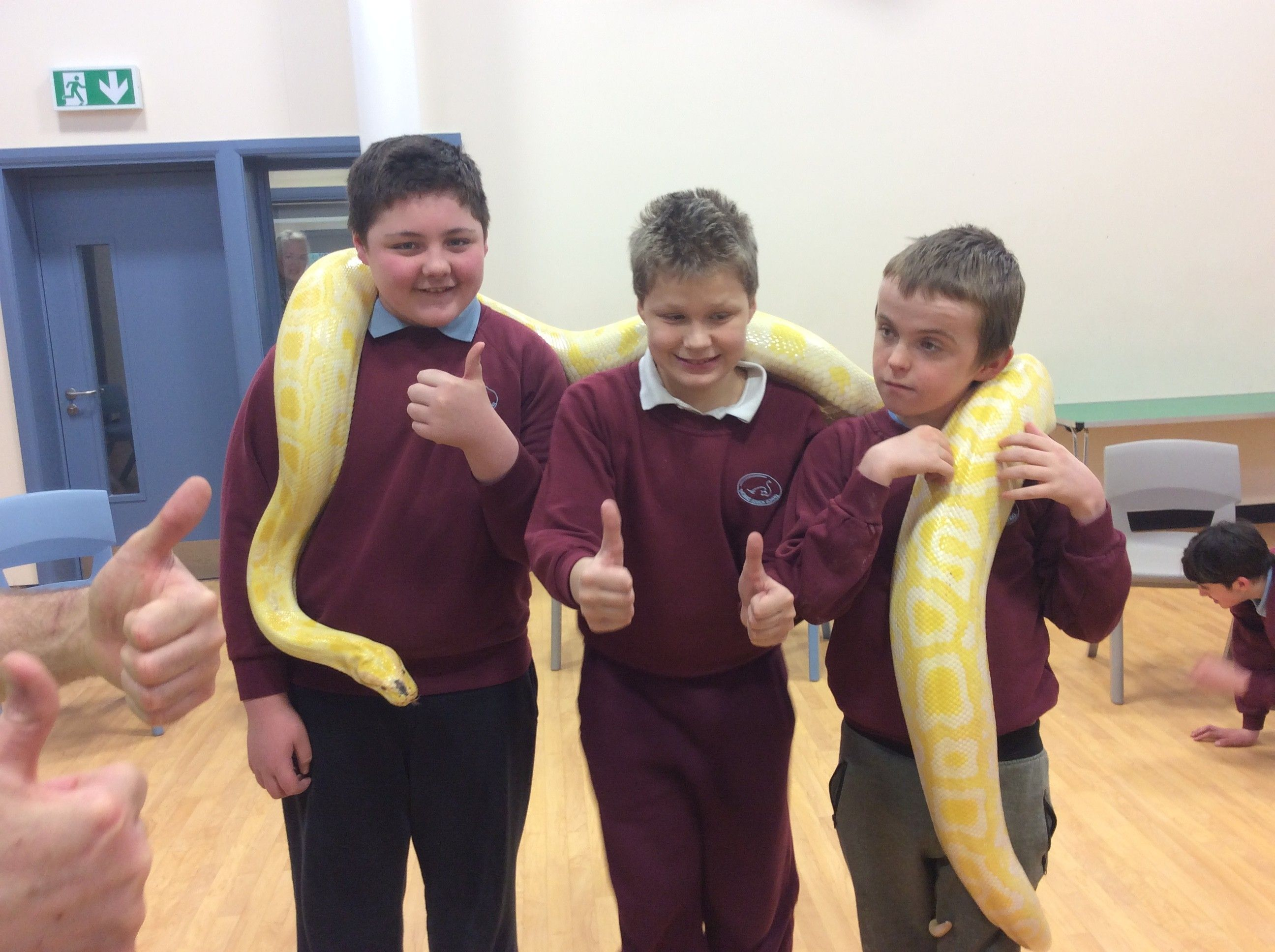 Crazy Creatures for Science Week